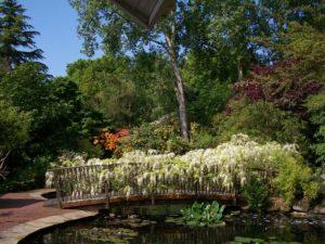 Pine Lodge Gardens, St Austell