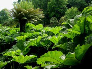 Trebah Garden, Falmouth