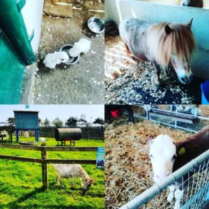 Farm Animals, DairyLand, Newquay