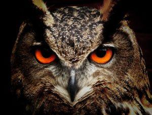 Spot an Owl this Halloween