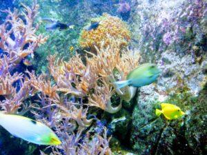 Colourful Fish at Blue Reef Aquarium