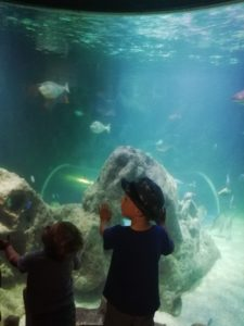 Children will be amazed at the Blue Reef Aquarium, Newquay