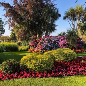 We won a South West in Bloom Award