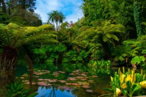 A Jungle in Cornwall at The Lost Gardens of Heligan