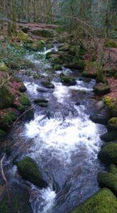 Kennall Value nature reserve, Cornwall